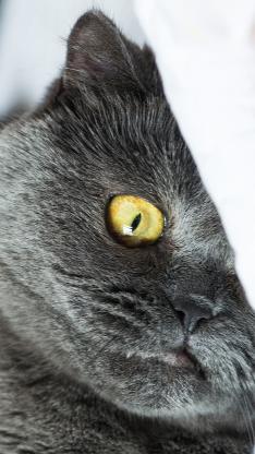 灰猫 喵星人 宠物 萌 可爱