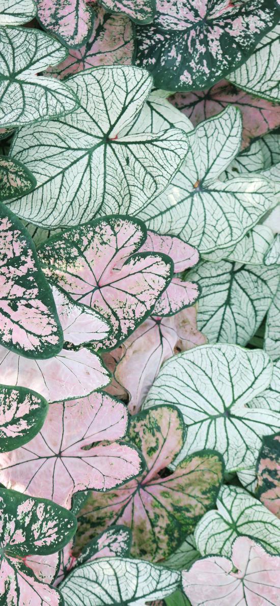 叶子 叶脉 纹路 植被