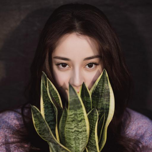 迪丽热巴 演员 明星 艺人 盆栽