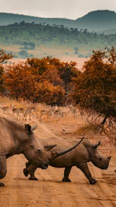 犀牛 道路 野外 保护区