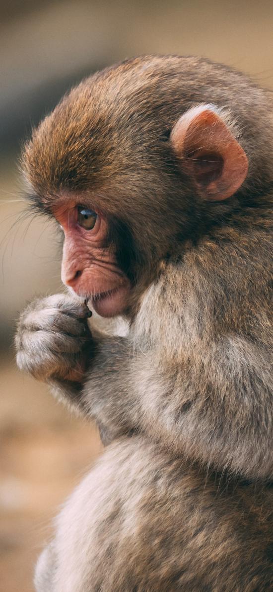 猴子 猿类 小猴 毛发