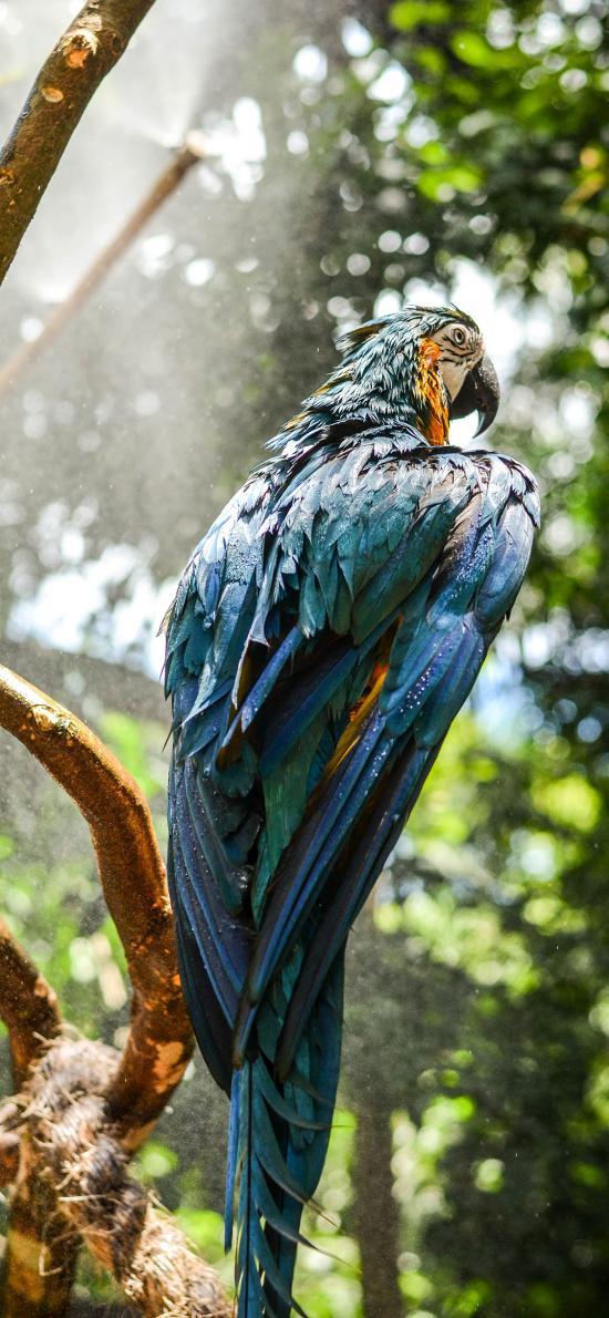 鸟类 鹦鹉 树枝 羽毛