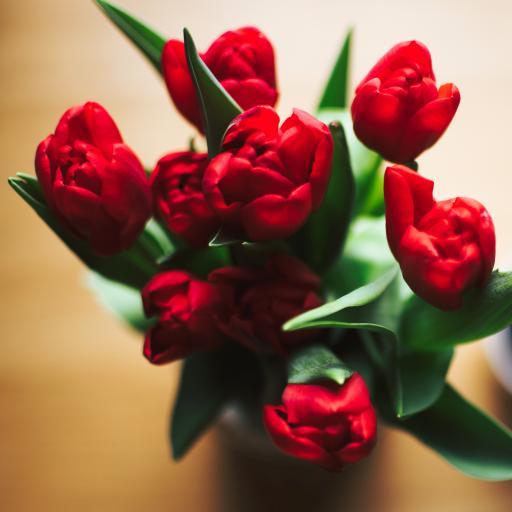 鲜花 郁金香 鲜花 枝叶 花朵