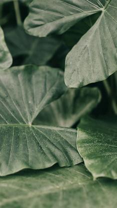 叶子 绿色 水滴 植被