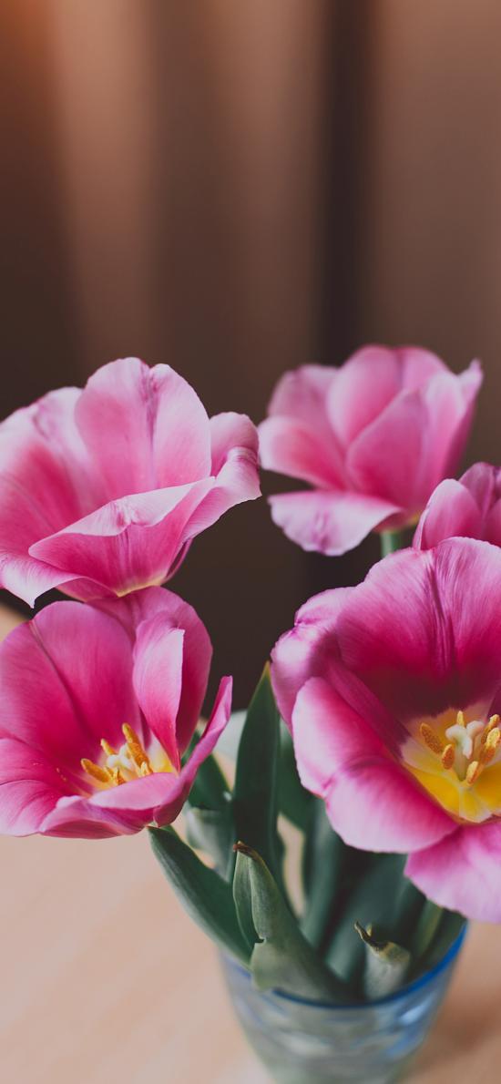 盛开 鲜花 花蕊 花朵