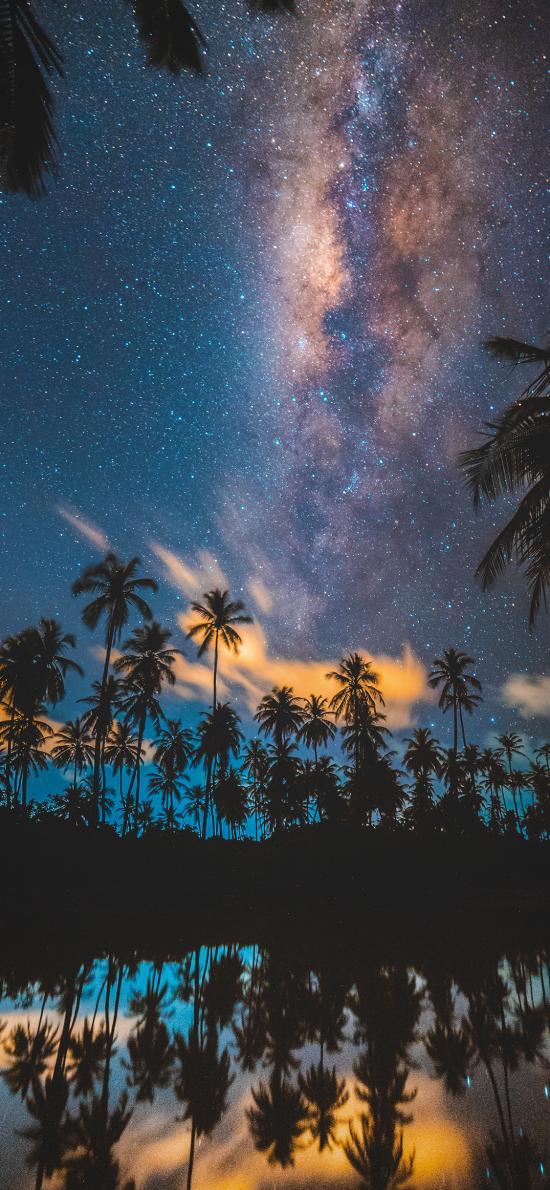 星空 夜景 椰樹 唯美