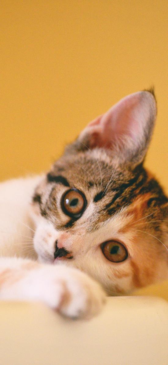 貓咪 喵星人 寵物 可愛 萌 黃色