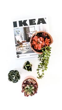 盆栽 绿植 杂志 多肉
