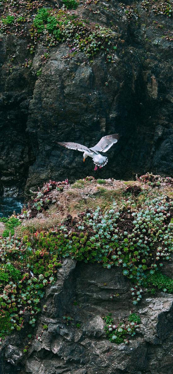 景色 飞鸟 峭壁 绿植 生长
