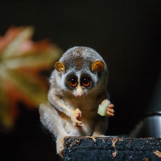 懒猴 猴类 低等 觅食
