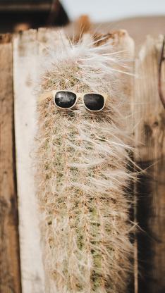 沙漠之花 仙人掌 墨镜 创意