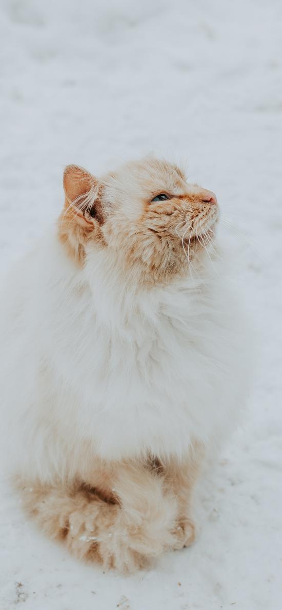 猫咪 橘猫 可爱 皮毛 宠物