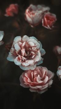 鲜花 白色 红色 绽放 鲜艳