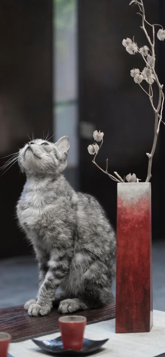 宠物猫 喵星人 猫咪 插花