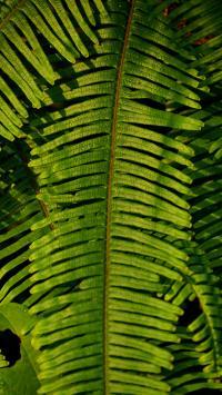 叶子 枝叶 绿色 蕨类