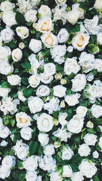 花田 花圃 鲜花 玫瑰 盛开
