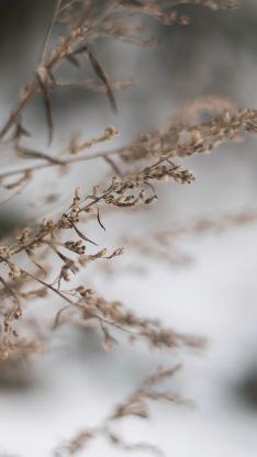 干草 枯萎  迷雾 干花