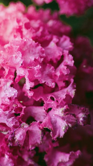 花朵 鲜花 露珠 粉