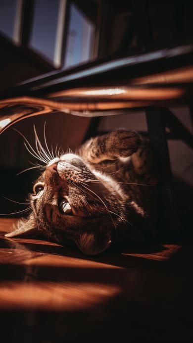 猫咪 宠物 光影 地板