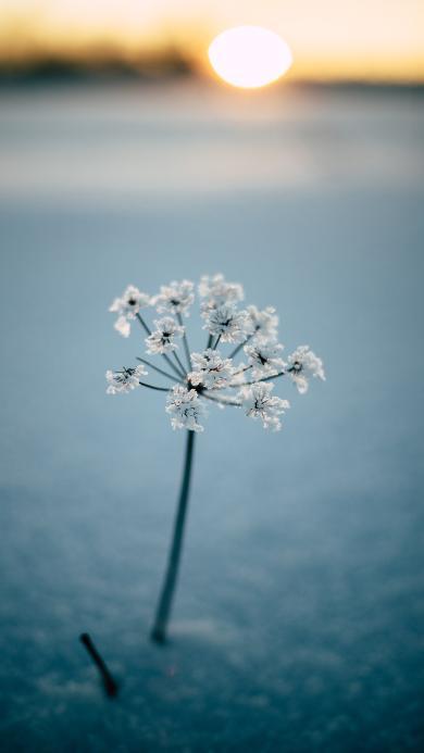 小花 花朵  一枝独秀 太阳