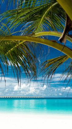 蓝天白云 大海 椰树 海景