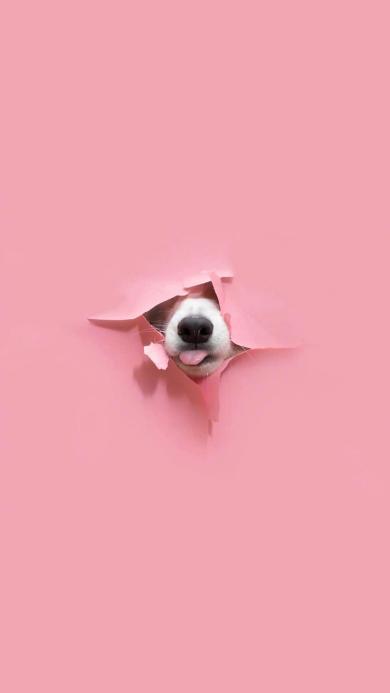 狗 可爱 纸 撕裂 粉色 吐舌 宠物