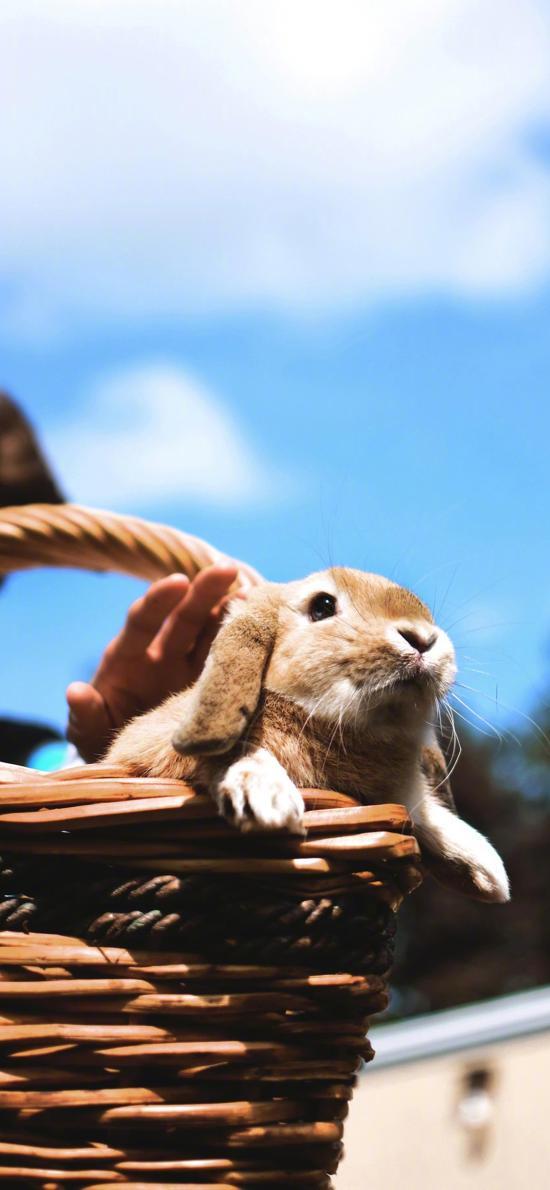 兔子 可爱 宠物 竹筐 萌