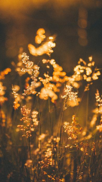 郊外 花丛 阳光 唯美