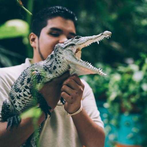 鳄鱼 尖牙 凶猛 爬行