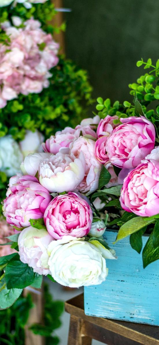 鲜花 蔷薇 粉色 白色 鲜艳