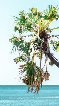椰树 海岸 天空 蔚蓝