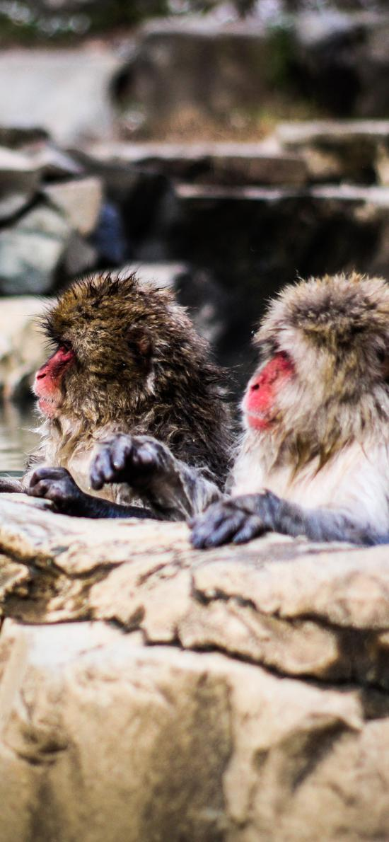 猴子 猕猴 泡温泉 聪明