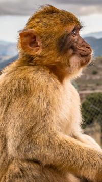 猴子 侧脸 猿类 野生