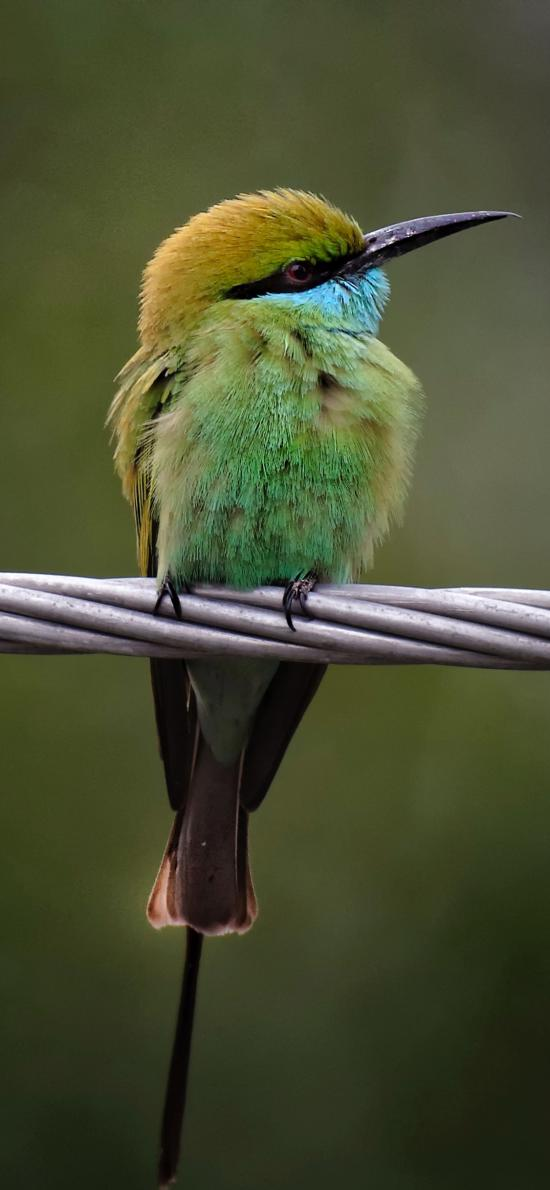 绳索 飞鸟 绿色 栖息