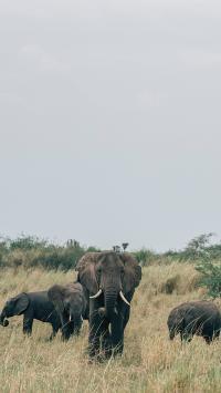 大象 野外 野象 草原