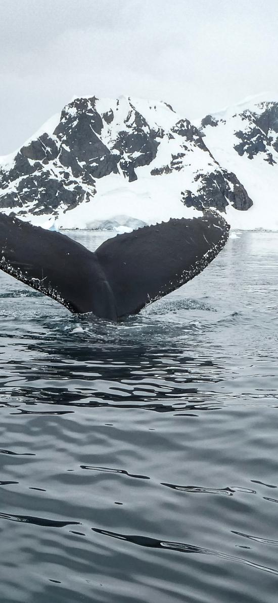 魚尾 鯨魚 海水 冰川