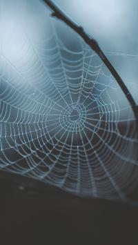 昆虫 蜘蛛  结网 蜘蛛网