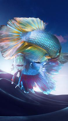 斗鱼 绚丽 色彩 观赏鱼