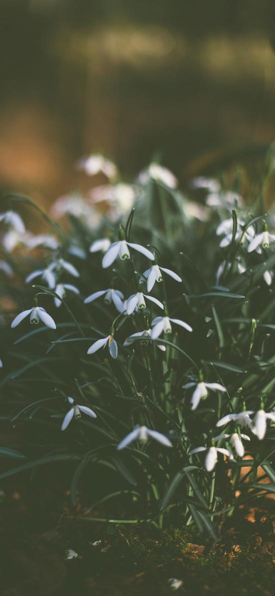 鲜花 花丛 白色 小清新