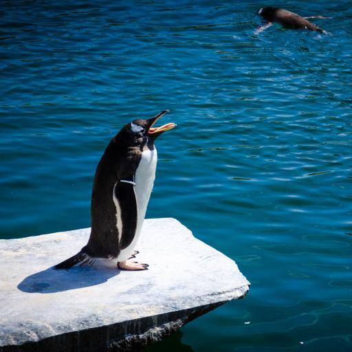 企鹅 可爱 海水 蓝色