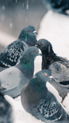 鸽子 鸟 翅膀 栖息