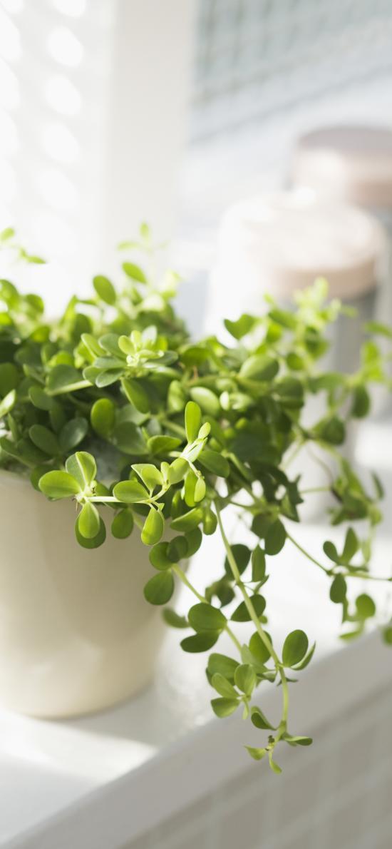 盆栽 绿植 叶子 小清新 绿化