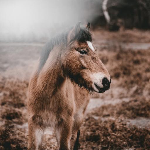 郊外 棕马 马驹 奔跑