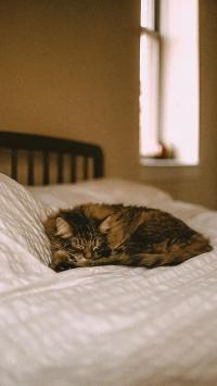 猫咪 宠物 床  眯眼