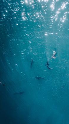航拍 海洋 鲸鱼 鱼群
