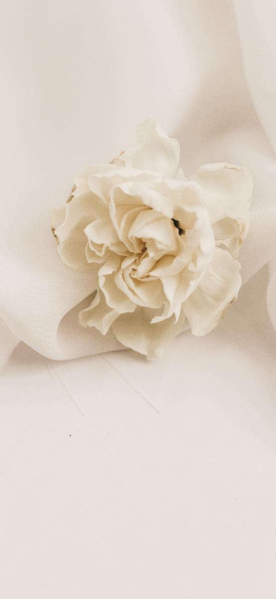絲巾 鮮花 白色 純潔