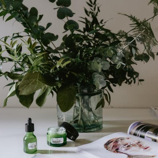 静物 绿植 杂志 花瓶