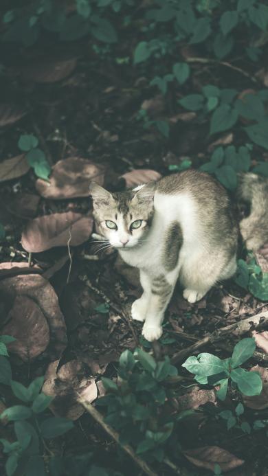 猫咪 户外 落叶 宠物