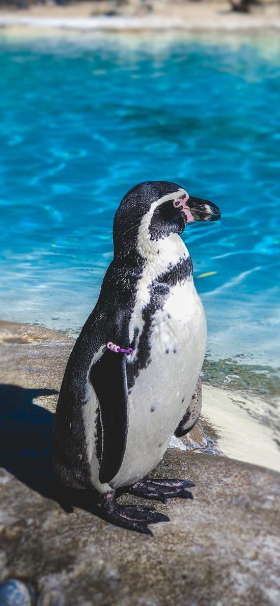 企鵝 禽類 黑白 海洋生物