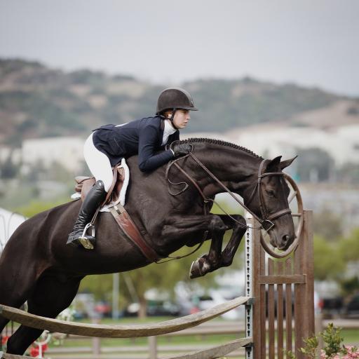 马术 骑马 运动 跳跃
